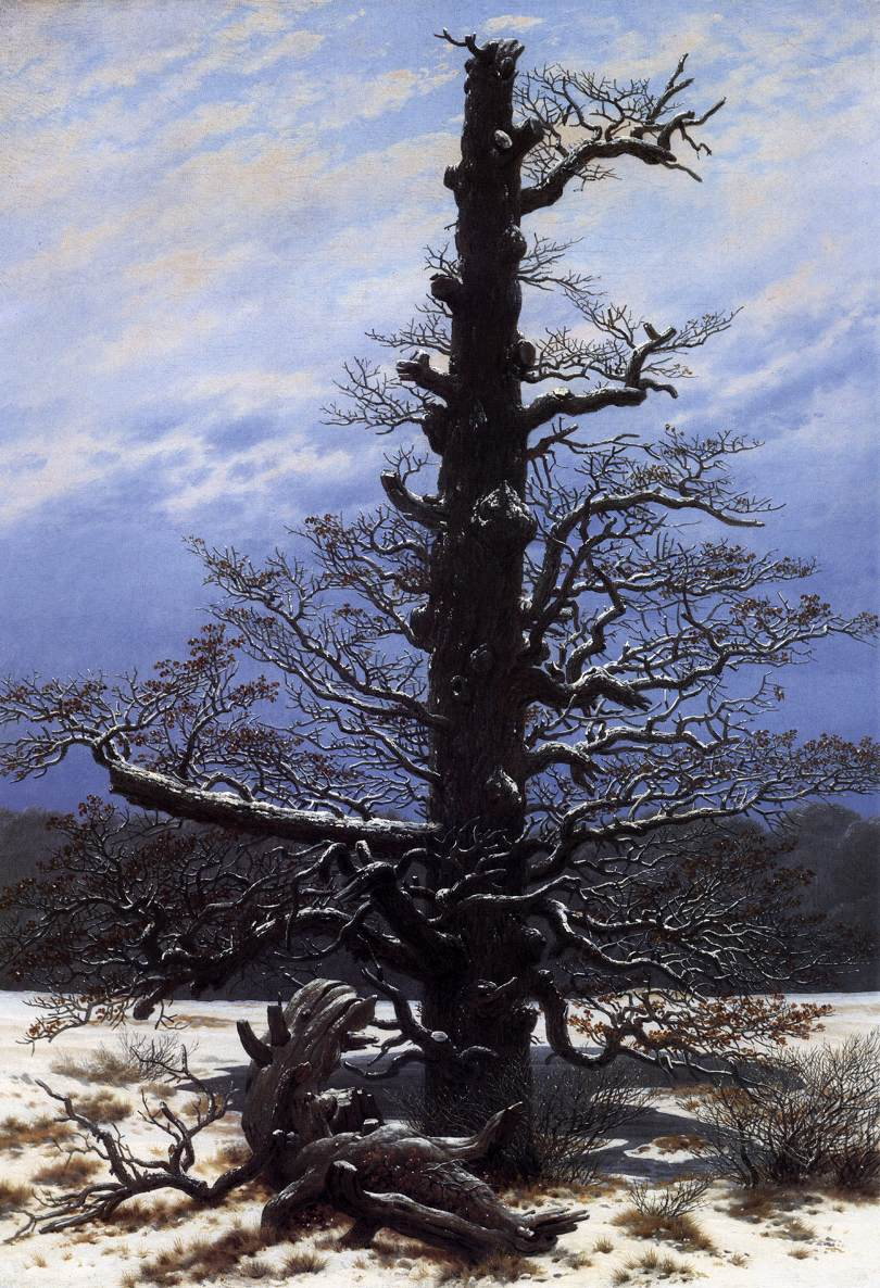 The Oaktree in the Snow