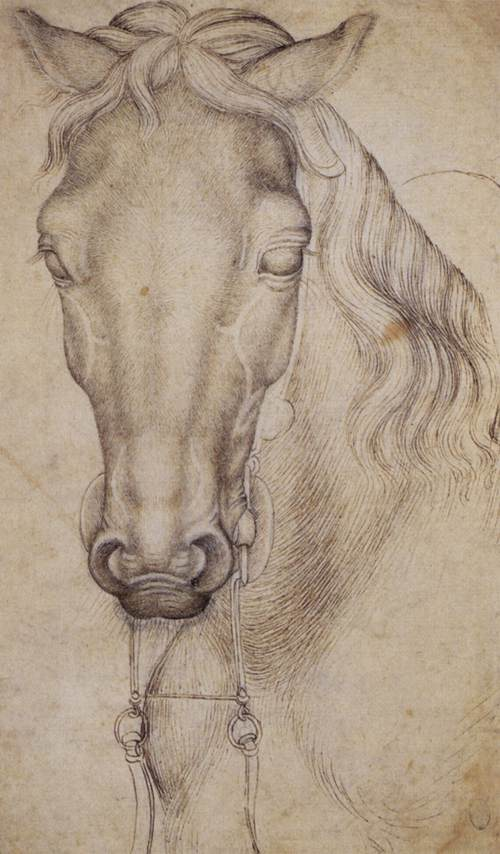 Study of the Head of a Horse