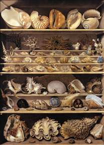 Selection of Shells Arranged on Shelves