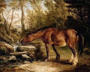 A Horse Drinking at a Stream