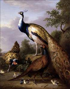 Peacock, Hen and Cock Pheasant in a Landscape