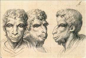 Physiognomic Heads Inspired by a Camel