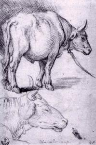 Two Studies of Bulls