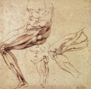 Three Studies of a Leg