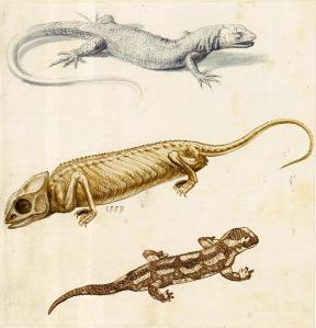 Study of a Lizard, a Chameleon and a Salamander