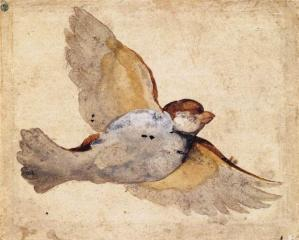 Study of a Flying Sparrow