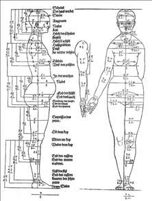 Studies on the Proportions of the Female Body