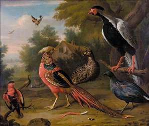 Exotic Pheasants and Other Birds