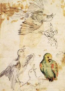 Study of a Parrot and Other Birds